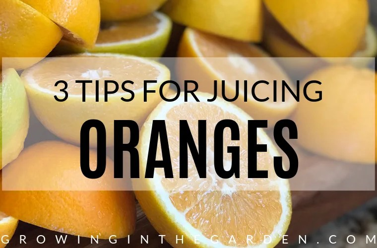 Three tips for juicing oranges #juicing #orangejuice #oranges #citrus