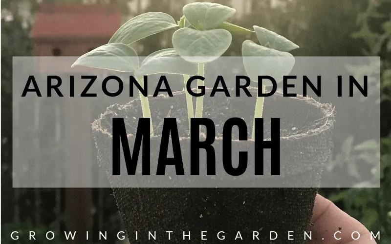 Arizona Garden in March#gardening #garden #arizonagarden #marchgarden #gardeninginarizona #desertgarden