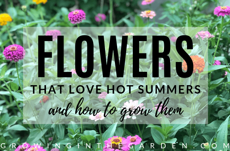 10 Flowers that Love Hot Summers - and How to Grow Them