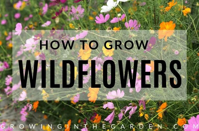 How to grow wildflowers in Arizona