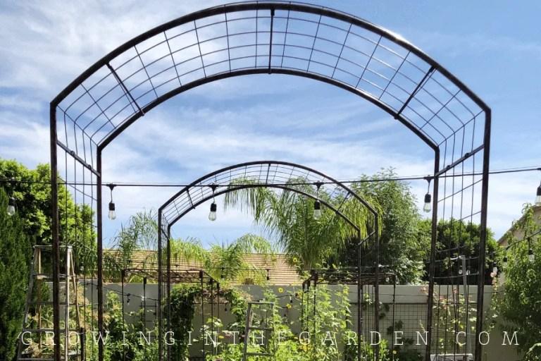 Raised-bed garden design tips