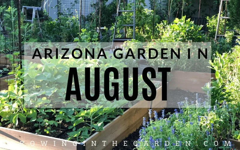 Arizona Garden in August