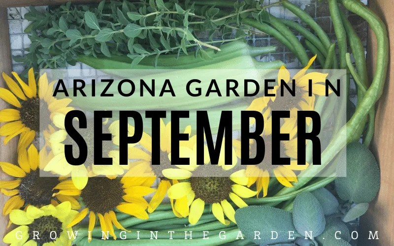 Arizona Garden in September