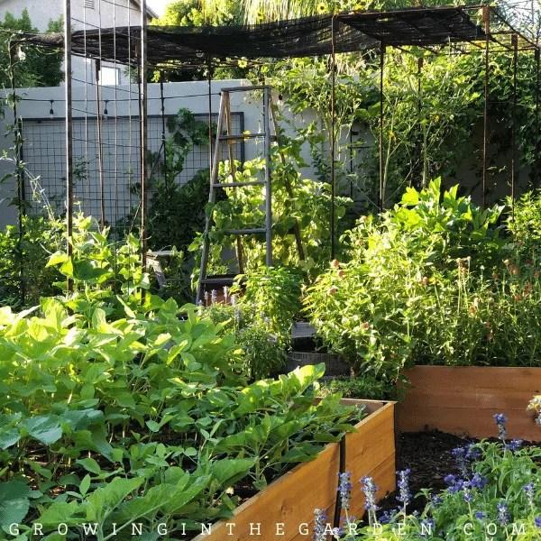 How to grow a vegetable garden in Arizona #arizonagardening #arizonagarden #desertgardening #hotweathergarden #howtogarden