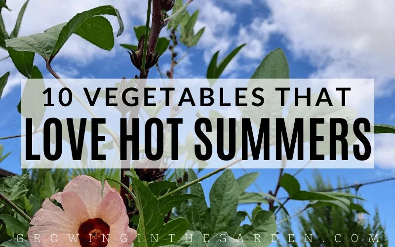 10 Vegetables that Love Hot Summers - and How to Grow Them
