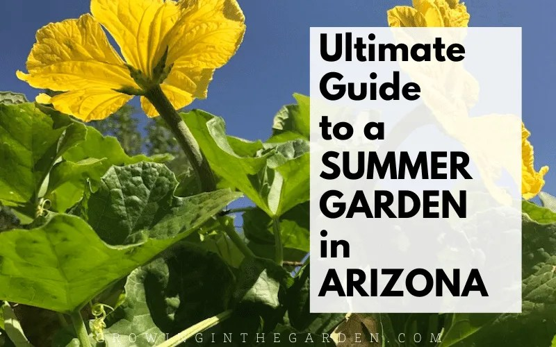 Ultimate Guide for a summer garden in Arizona (1)