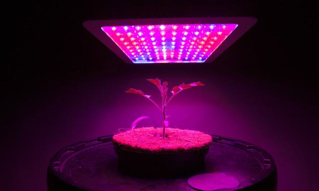 King Led Grow Lights