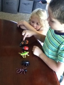 insect study for young children