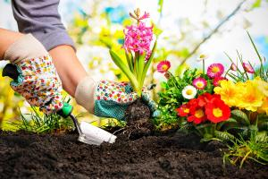 How Gardening Can Improve Your Health