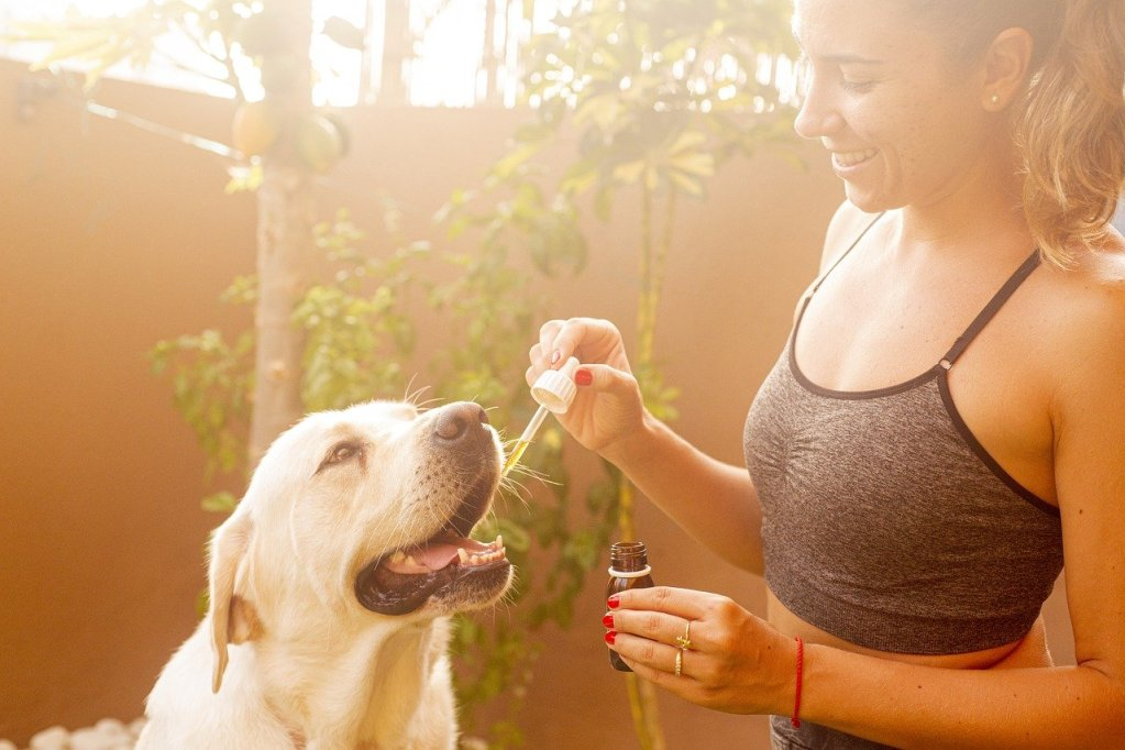 cbd oil for my pet | CBD for pets