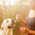 What are the Benefits of CBD Oil for My Pet and How Much CBD Oil is Right for My Pet?