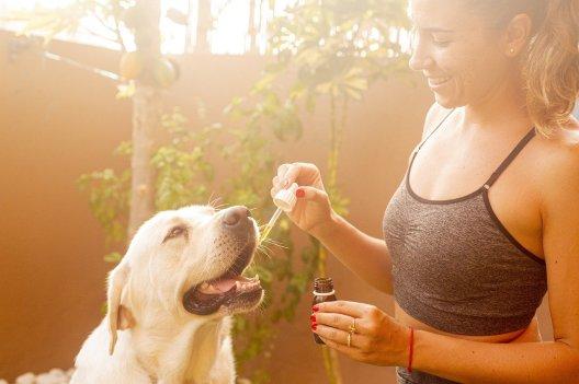 cbd oil for my pet | CBD for pets