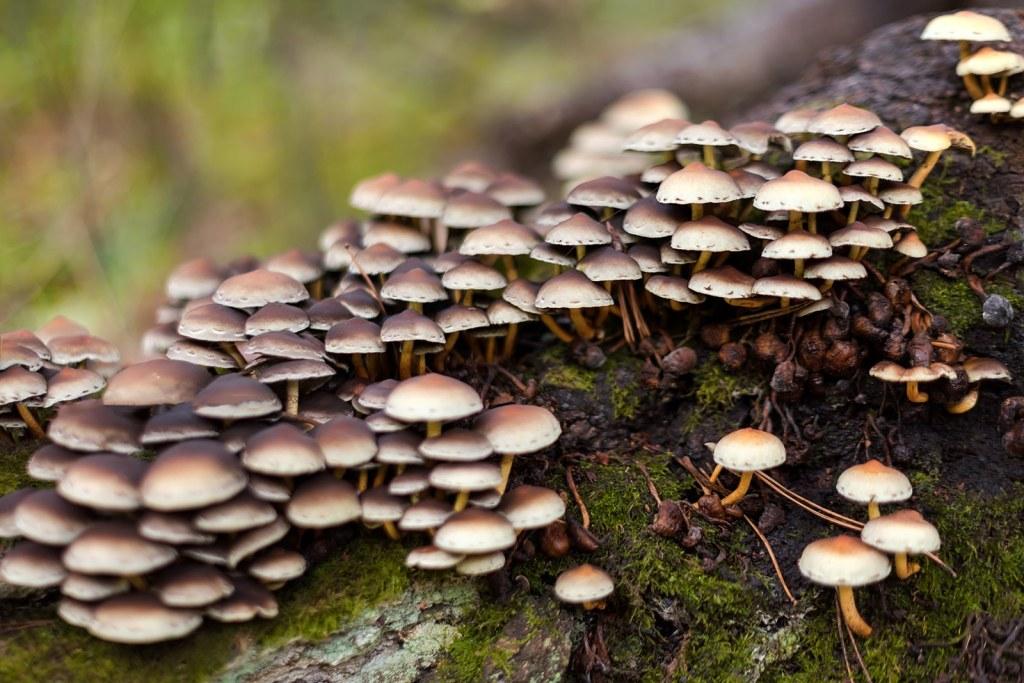 taking mushroom tinctures