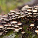 Mushroom Tinctures: Everything You Need to Know & More!