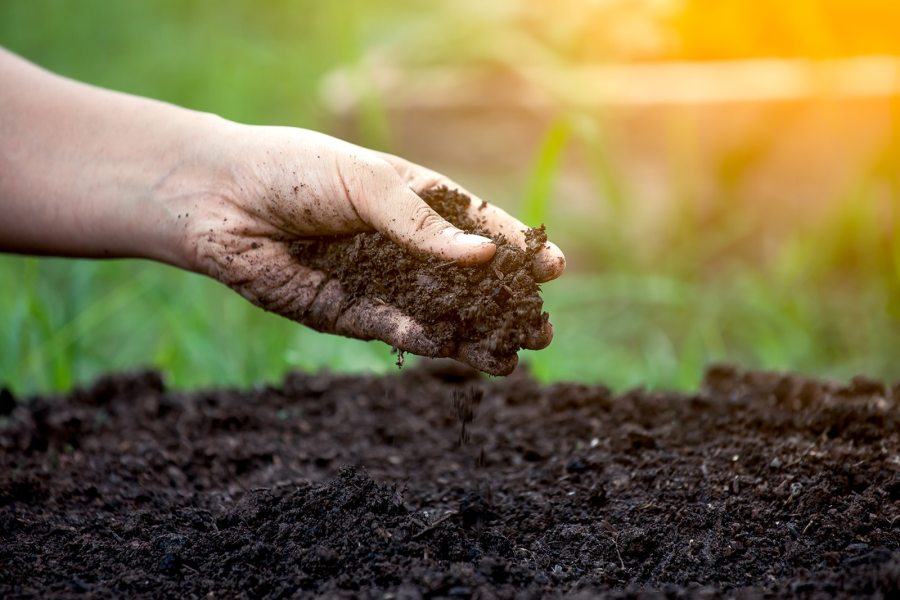 organic gardening | living soil systems