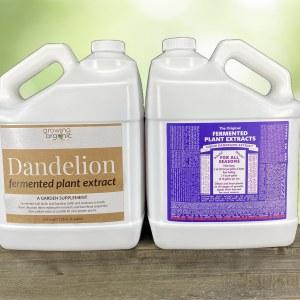 dandelion fermented plant extract