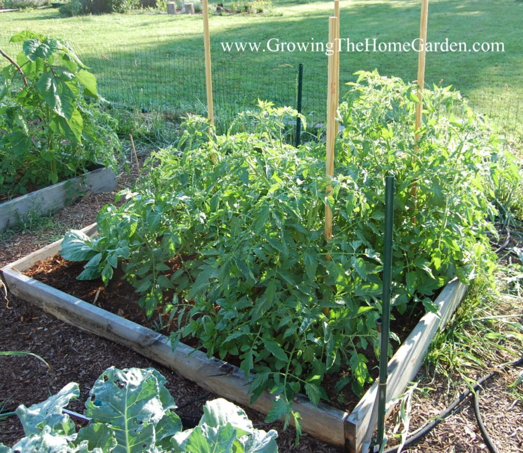 Vegetable Garden Layout Archives Growing The Home Garden