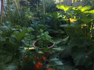 Full garden in July