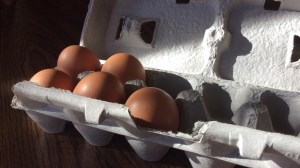 Finding Local healthy pastured meats, dairy and eggs