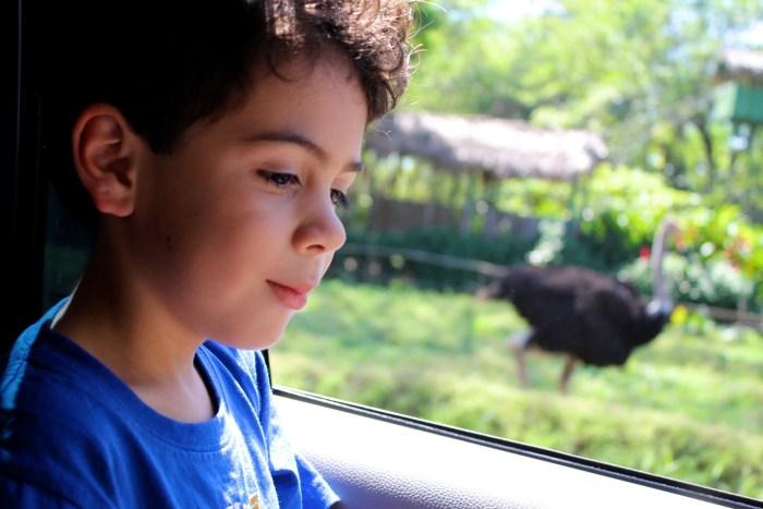 Auto Safari Chapin Guatemala