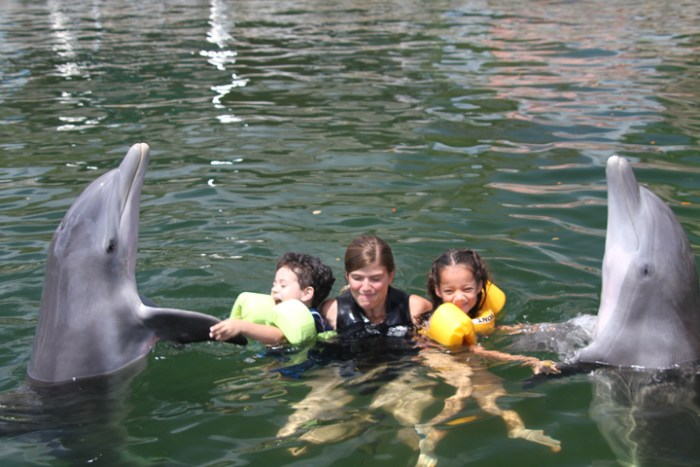 Swimming with dolphins in Key Largo