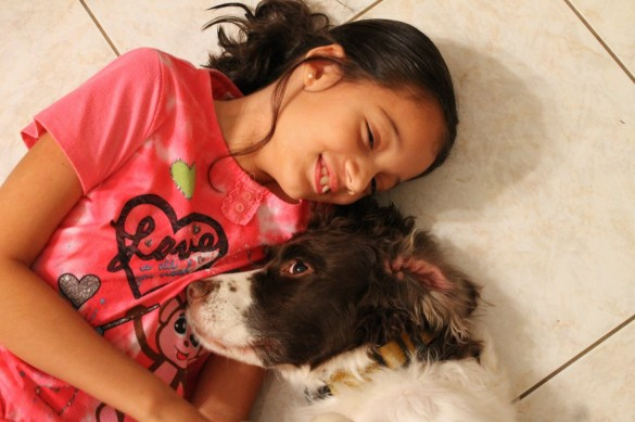 girl with her dog, Springer Spaniel