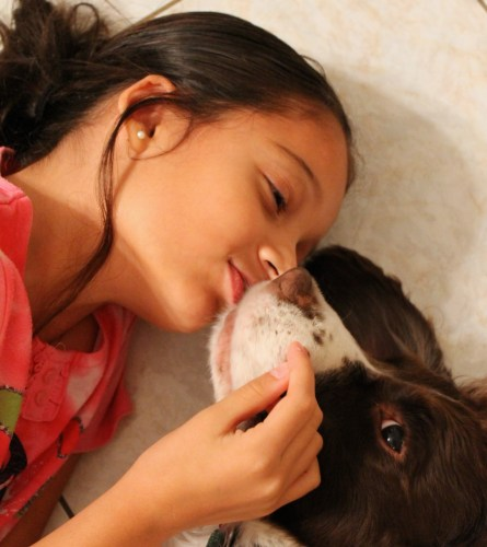girl kissing her dog , Springer Spaniel