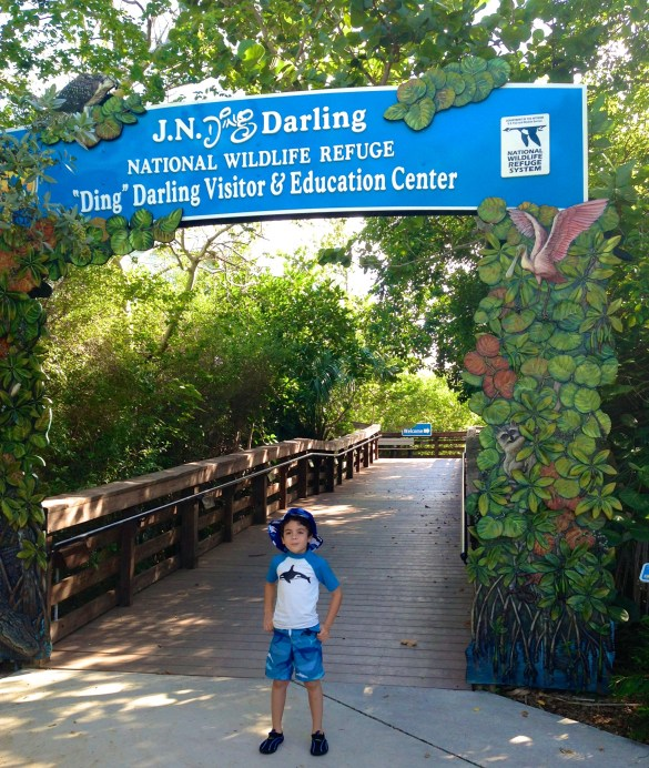 Ding Darling National Wildlife Refuge