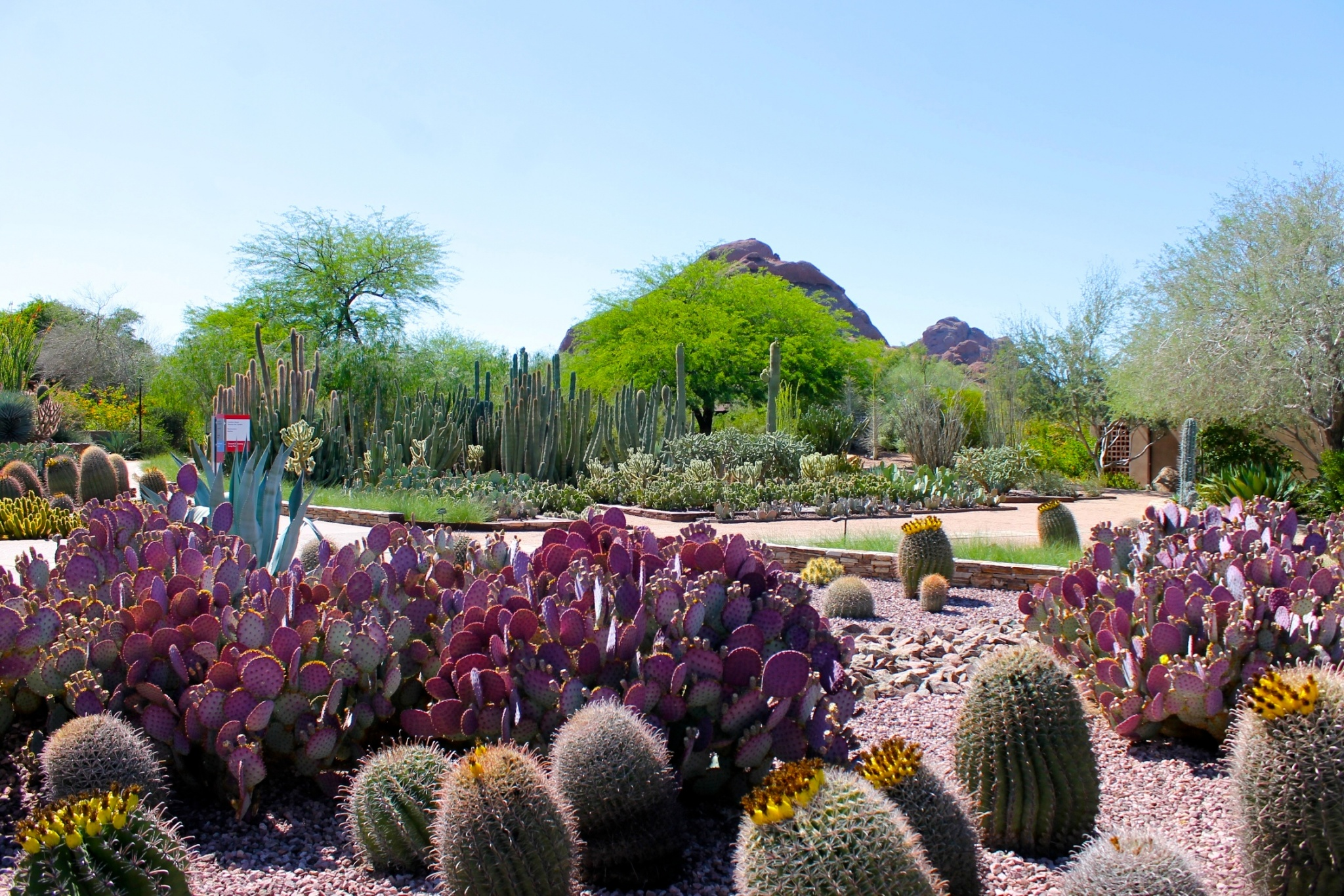 Spring At The Desert Botanical Gardens Phoenix Scottsdale