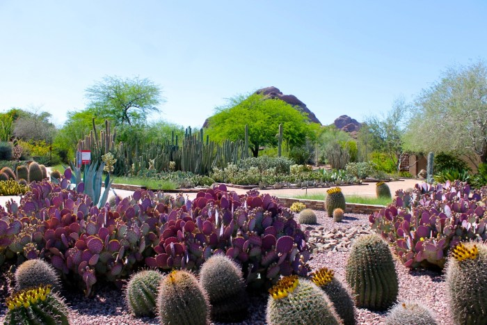 The Desert In Bloom At The Desert Botanical Garden in Phoenix