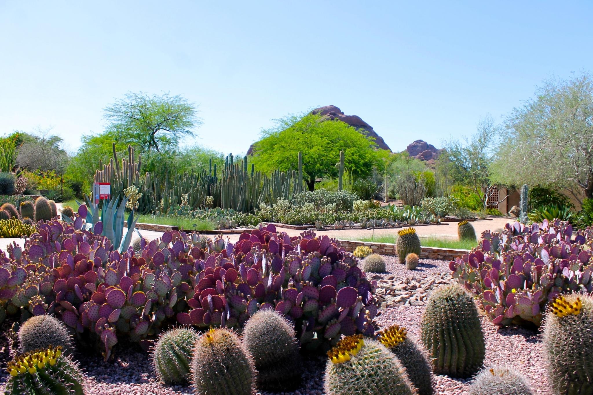 Spring At The Desert Botanical Gardens Phoenix Scottsdale
