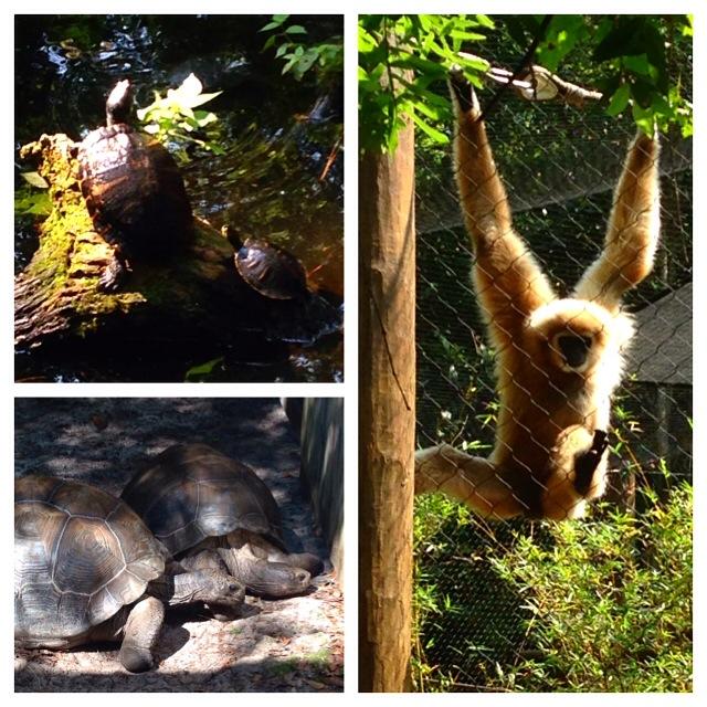 Santa Fe College Teaching Zoo Gainesville