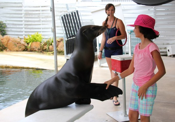 Theater of the Sea seal interaction
