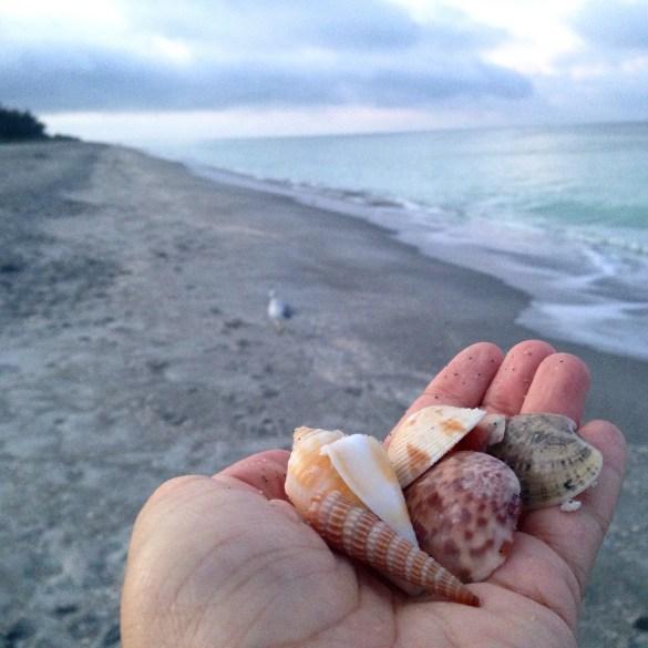 Hand holding shells in Sanibel Island at South Seas Island Resort