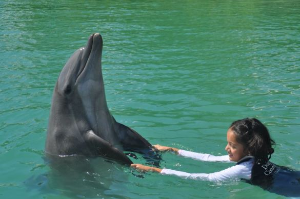 Swimming with dolphins at Hawks Cay.