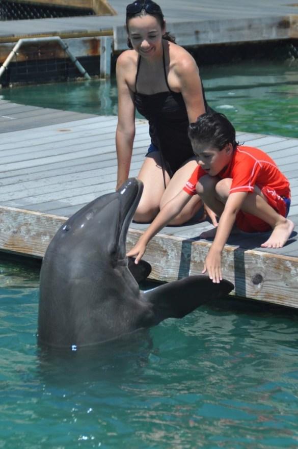 Dockside Dolphins program at Hawks Cay.