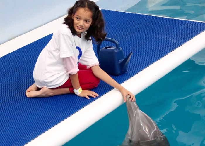 5 Reasons To Visit The Clearwater Marine Aquarium With Your Kids