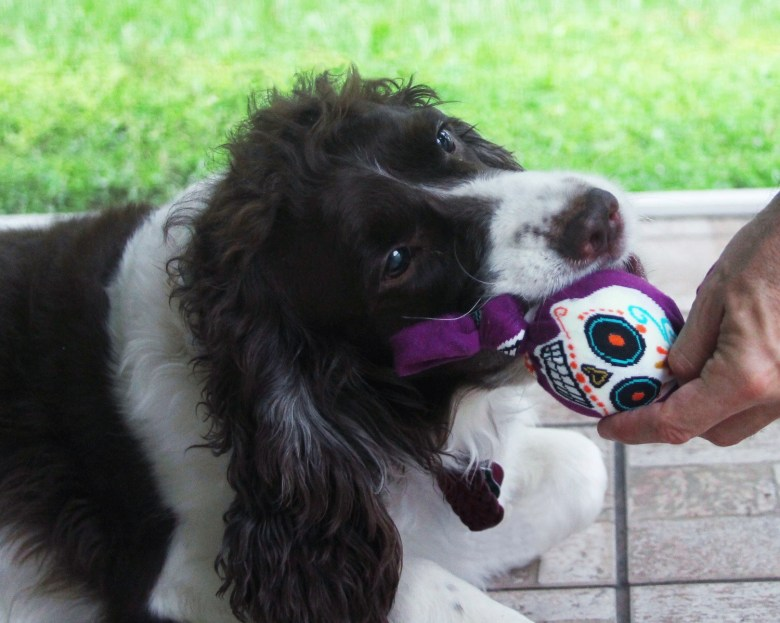 DIY Day of the Dead dog toy