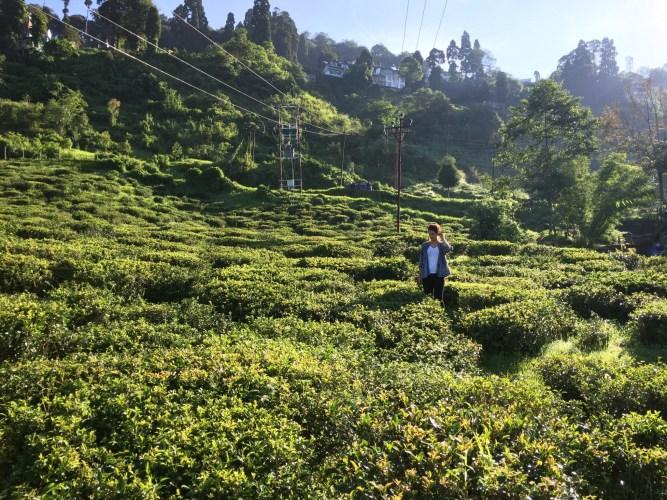 Darjeeling India
