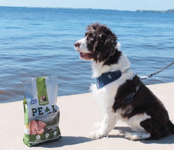 Rachael Ray Nutrish Peak dog food