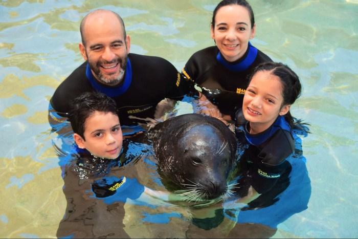 seal encounter at Miami Seaquarium