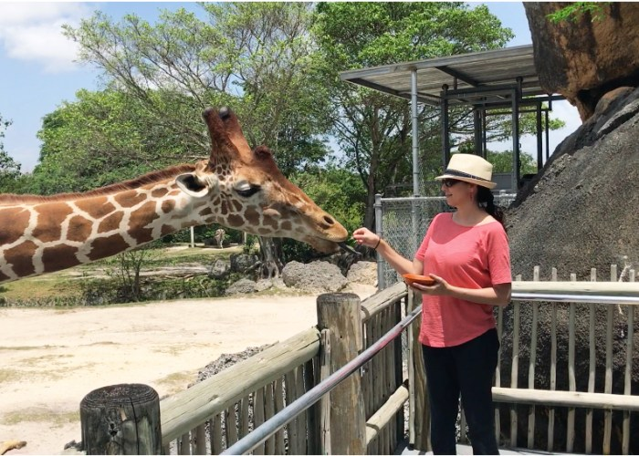 Why Visiting Zoo Miami Is A Must For Families!