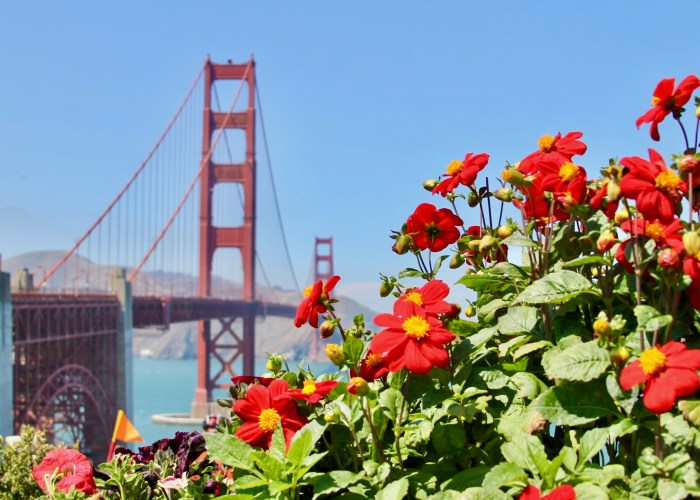 48 Hours In San Francisco, How To Have An Extraordinary Time