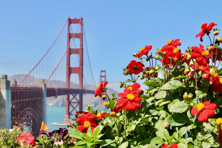 The Golden Gate Bridge with flowers in the foreground