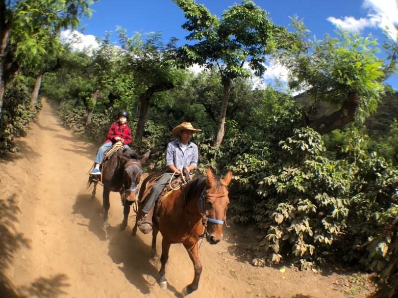 coffee plantation mule ride at Finca Filadelfia