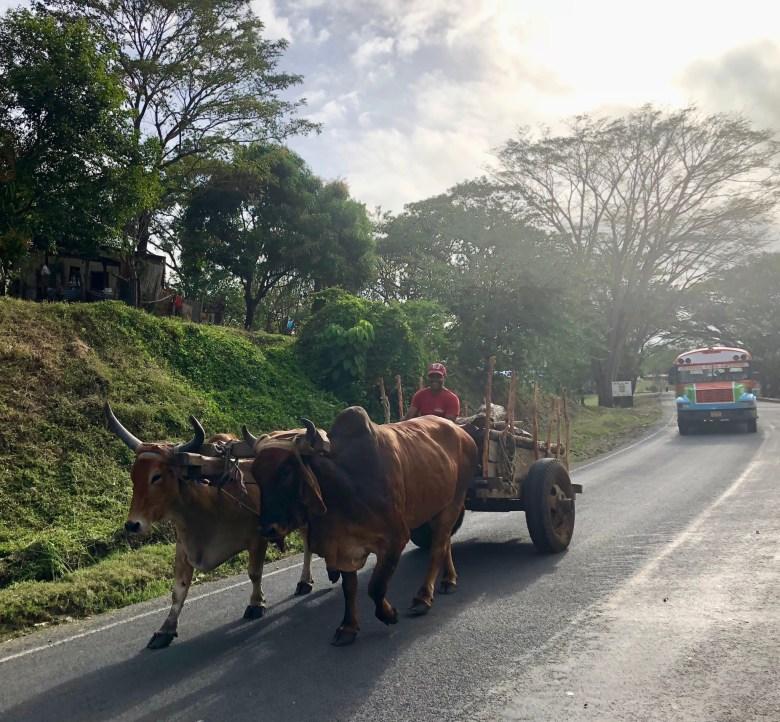 ox cart in Nicaragua
