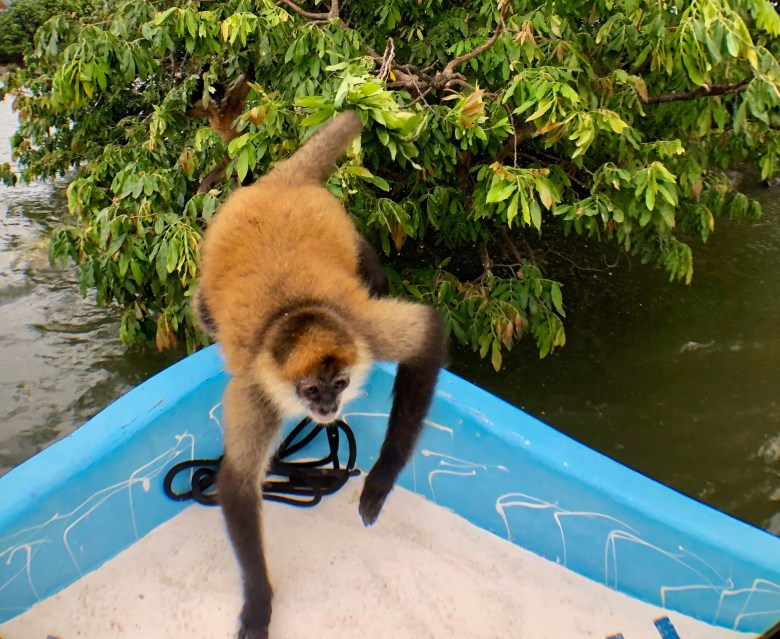 Monkey jumping onto our boat during boat tour of Lake Nicaragua