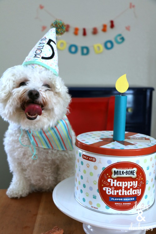 dog birthday party ideas and recipes