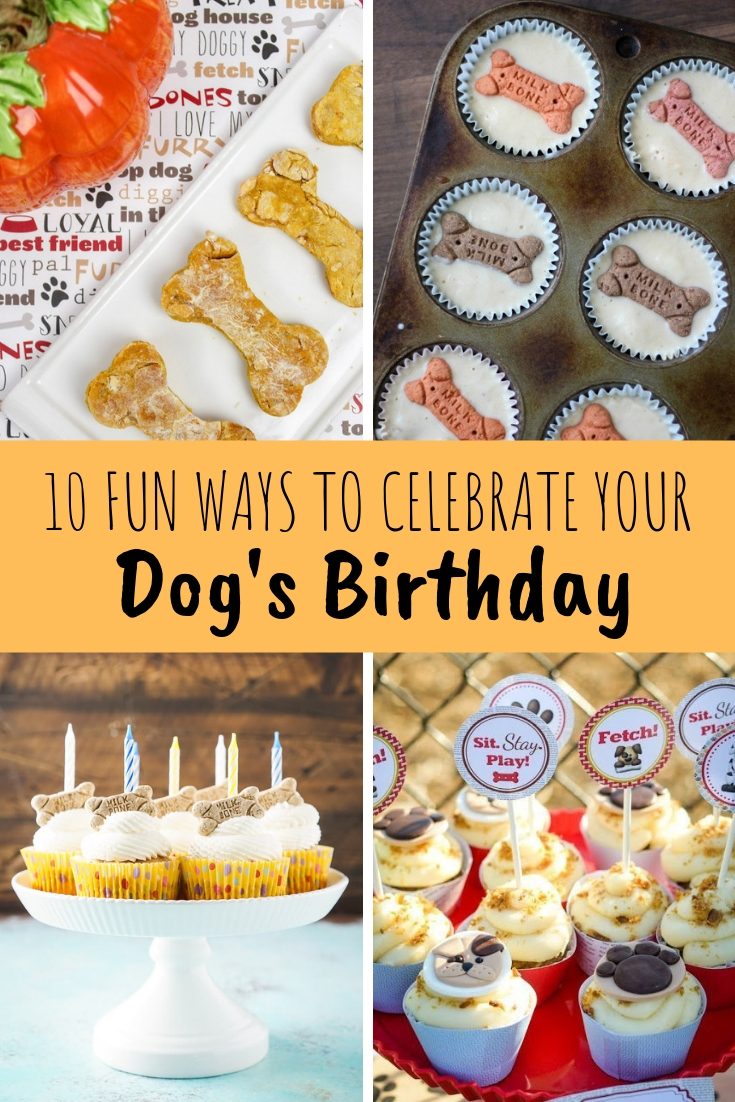 ideas and recipes to celebrate your dog's birthday