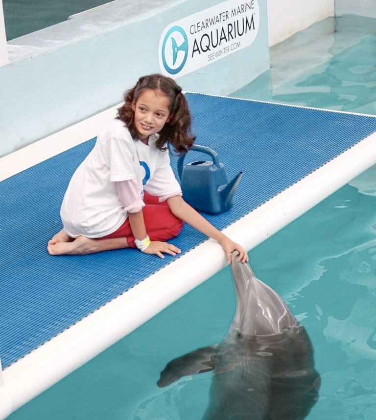 Clearwater Aquarium dolphin experience
